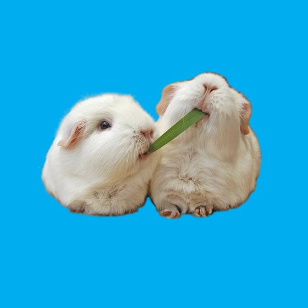 Корма для грызунов