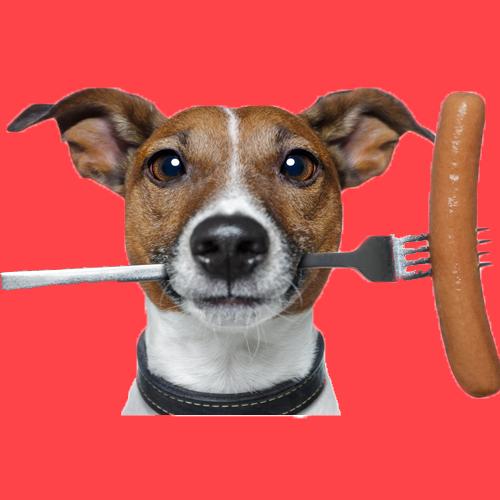 Лечебно-профилактические диеты для собак