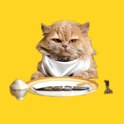 Лечебно-профилактические диеты для кошек