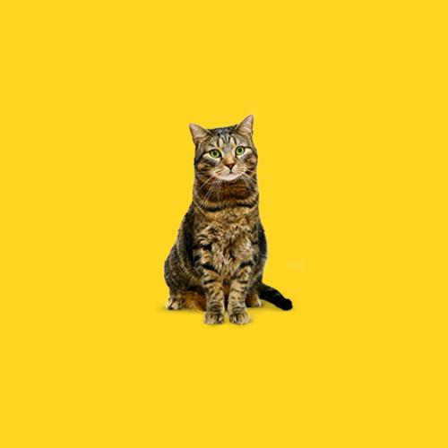 Пожилые коты