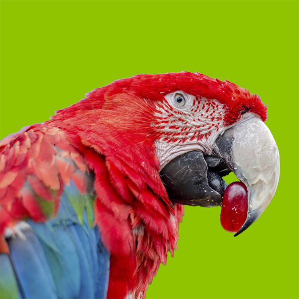 Витаминно-миниральные добавки для птиц