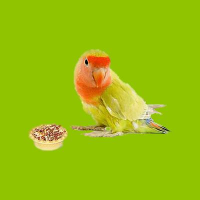 Лакомства для птиц